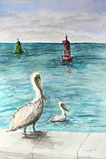 Key West Paintings - Pelican by Janis Lee Colon
