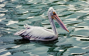 Jenny Rainbow - Pelican on the Green Water