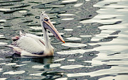 Jenny Rainbow - Pelican with Abstract Water Reflections...