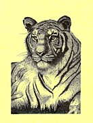 The Tiger Drawings - Pen and Ink drawing of Royal Tiger by Mario  Perez
