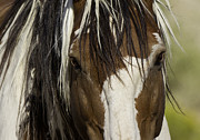 Mustangs Metal Prints - Picassos Eyes Metal Print by Carol Walker