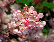 Cherry Blossoms Photo Originals - Pink Cherry Blossoms by Larry Oskin