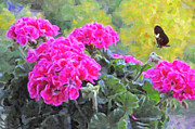 Abstracted Photos - Pink Geraniums And Butterfly by Kenny Francis