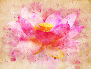 Pink Lotus Posters - Pink Lotus Flower Abstract Artwork Poster by Nikki Marie Smith