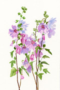 Original Watercolor Painting Metal Prints - Pink Mallow Flowers Metal Print by Sharon Freeman