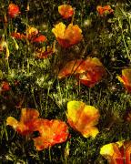 RC deWinter - Poppies Will Make Them Sleep