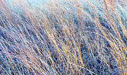 Signed Photo Prints - Prairie Grass - Texas Print by David Perry Lawrence