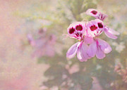 Colorful Contemporary Art - Pretty and Delicate in Pink by Sabrina L Ryan