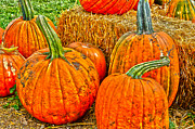 Fort Collins Prints - Pumpkin Print by Keith Ducker