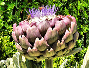 Cindy Nunn - Purple Artichoke