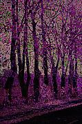 Purple Trees Print by Carol Lynch