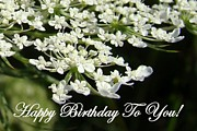 Rosanne Jordan - Queen Annes Lace Birthday