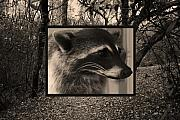 Cute Mixed Media Framed Prints - Raccoon 2 Framed Print by Ellen Henneke
