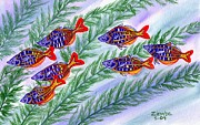 Lori Ziemba Prints - Rainbow fish Print by Lori Ziemba