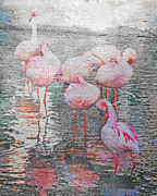 Lizi Beard-Ward - Rainy Day Flamingos