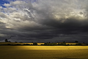 Farm Scenes Photos - Rapefield Under Dark Sky by Heiko Koehrer-Wagner
