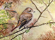 Postcard Painting Originals - Red Backed Shrike by Andrew Read