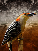 Pamela Phelps - Red-Bellied Woodpecker-Textured Image