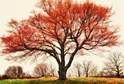 Dan Carmichael - Red Bud Tree - Blue Ridge Parkway I
