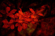 Red Leaves Pyrography - Red by Linda Hoey