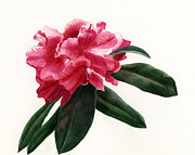 Blooming Paintings - Red Rhododendron Blossom by Sharon Freeman