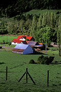 Red Roofed Barns Posters - Red Roofed Barn Chiloe Island Poster by Craig Lovell