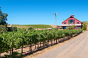 Viticulture Framed Prints - Red Wine Barn - Beautiful view of wine vineyards and a Red Barn in Napa Valley California. Framed Print by Jamie Pham