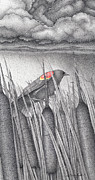 Serene Drawings Prints - Red-winged Blackbird Print by Wayne Hardee