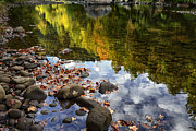Williams River Scenic Backway Prints - Reflections of Fall Williams River Print by Thomas R Fletcher