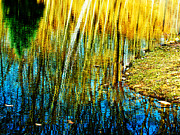 Tranquil Moments Posters - Reflective Pond Inspired by Monet Poster by Carol F Austin