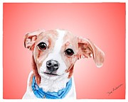 Animal Shelter Drawings - Riki a former shelter sweetie by Dave Anderson