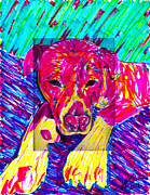Dog Portrait Digital Art Originals - Rufus sketch by Keri Costello