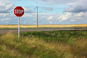 Sandra Cunningham - Rural stop sign on the prairies