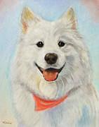 Head And Shoulders Pastels Prints - Samoyed Painting Print by Kate Sumners