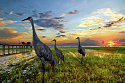 Debra and Dave Vanderlaan - Sandhill Sunset