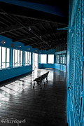 Guinapora Graphics Prints - Santa Monica Pier Blue Room Print by Guinapora Graphics