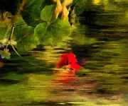 RC deWinter - Scarlet Sinking into Sunset