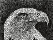 Featured Drawings - Scribble Eagle by Nathan Shegrud