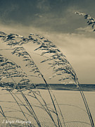 Sea Oats Digital Art Prints - Sea Oats Print by Elizabeth Wright