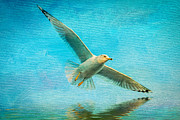 Seagull Mixed Media Metal Prints - Seagull In Flight Metal Print by Michael Petrizzo