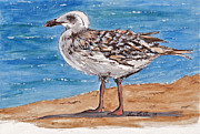 Sheena Prints - Seagull Print by Sheena Bolken