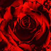 Di Digital Art - Seductive Red Rose by Maggie Vlazny