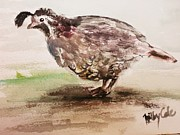 California Quail Paintings - See my Plume by Trilby Cole
