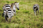 Repetition Photo Originals - Serengeti Migration Blurr - 4651 by Amyn Nasser