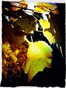Grape Leaves Posters - Shades Of October  Poster by Jeremiah Colley