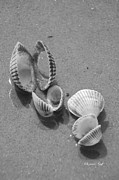 Suzanne Gaff - She Sells Sea Shells in Black and White