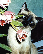 Kitten Prints Prints - Siamese in Tulips Print by Elia Peters