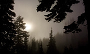 Greg Reed - Silhouettes of Trees on Mt Rainier