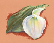 Lily Pastels Posters - Single Calla Lily and Leaf Poster by MM Anderson