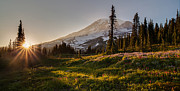 Northwest Art - Skyline Meadows Sunstar by Mike Reid